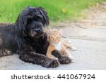 Stock photo friendship from different species black dog laying with orange cat on concrete road 441067924