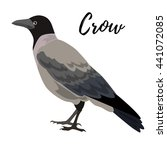 isolated gray crow bird on a... | Shutterstock .eps vector #441072085