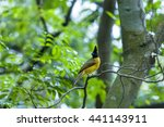 Small photo of The nature of the forests small animals are used as a denizen birds happily emits heat .