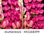 Bee Collecting Pollen...