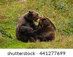 two fighting brown bears in the ... | Shutterstock . vector #441277699