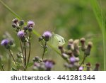 cabbage white butterfly   Shutterstock . vector #441281344