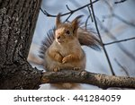 squirrel sitting on a branch | Shutterstock . vector #441284059