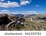 Small photo of Alpine anemone wild flowers in Rocky Mountains. Pasque Flower or Pulsatilla found on Cottonwood Pass near Buena Vista and Denver, Colorado, USA.