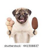 Dog Holding Ice Cream. Isolated ...