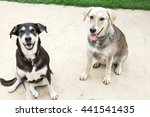 Two Mixed Breed Dogs Sit On A...