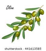 olive branch  olea europaea .... | Shutterstock .eps vector #441613585