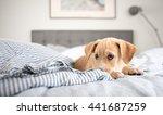 adorable small terrier mix... | Shutterstock . vector #441687259