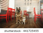Two Dogs At The Restauran....