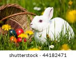 easter bunny on a beautiful... | Shutterstock . vector #44182471