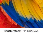 Parrot. Multi Colored Feathers...