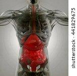 digestive system  human anatomy ... | Shutterstock . vector #441829675