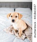 tan terrier mix puppy sitting... | Shutterstock . vector #441861037