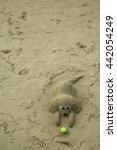 Sand Sculpture Of A Dog Wearin...