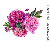 watercolor peonies bouquet.... | Shutterstock . vector #442113511
