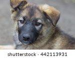 purebred puppy  dog teen | Shutterstock . vector #442113931