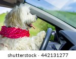 Dog Driving A Steering Wheel I...
