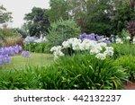 Wild Garden Panorama Of...