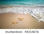 two starfish on a beach | Shutterstock . vector #44214676