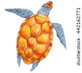 watercolor see turtle clip art | Shutterstock . vector #442162771