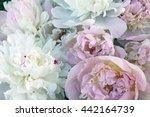 beautiful pink peony flowers...   Shutterstock . vector #442164739