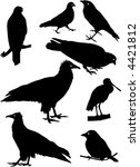 silhouettes of different birds | Shutterstock .eps vector #4421812