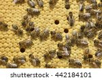 Work Bees In Hive Bees Convert...