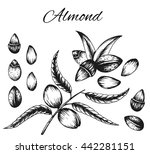 set of vector sketches of nuts... | Shutterstock .eps vector #442281151