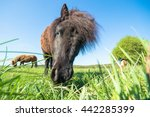horse in a field  farm animals  ... | Shutterstock . vector #442285399
