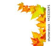 autumn maple leaves | Shutterstock . vector #442323691
