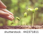 agriculture. growing plants.... | Shutterstock . vector #442371811