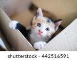 Stock photo little kitten in box 442516591