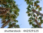 Palm Trees With Sun And Blue...