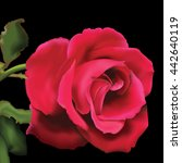 realistic red rose vector on... | Shutterstock .eps vector #442640119