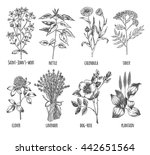 hand drawn set of herbs  ... | Shutterstock .eps vector #442651564