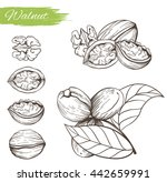 set of vector sketches of nuts... | Shutterstock .eps vector #442659991