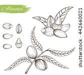 set of vector sketches of nuts... | Shutterstock .eps vector #442660021