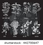 hand drawn set of herbs  ... | Shutterstock .eps vector #442700647