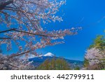 fuji mountain and cherry... | Shutterstock . vector #442799911