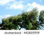trees whipped by the mistral... | Shutterstock . vector #442835959