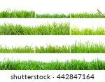 view of grass in high... | Shutterstock . vector #442847164
