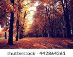 leaf fall in autumn park... | Shutterstock . vector #442864261