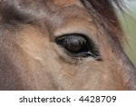 Close-up of a horse's eye - stock photo