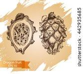 vector illustration sketch  ... | Shutterstock .eps vector #442935685