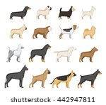 vector dog breed collection... | Shutterstock .eps vector #442947811