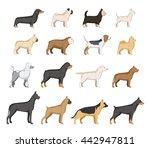 Vector Dogs Illustration