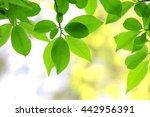 green leaves | Shutterstock . vector #442956391
