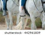 Horse Tourism Concept  Riders...