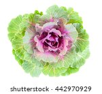 Color Cabbage Also Is Called...
