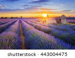 sun is setting over a beautiful ... | Shutterstock . vector #443004475
